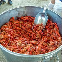 Best of Guide: Crawfish thumb